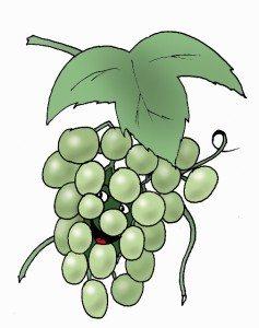 Vino (505x640)